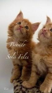 Brando Solis Feles