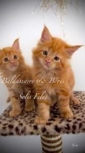 Baldassarre and Boris Solis Feles